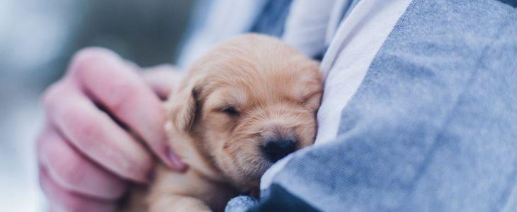 Gode råd om de kære dyr – find dem online
