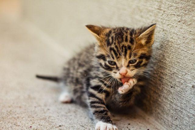 Få den bedste hjælp til dit nye dyr